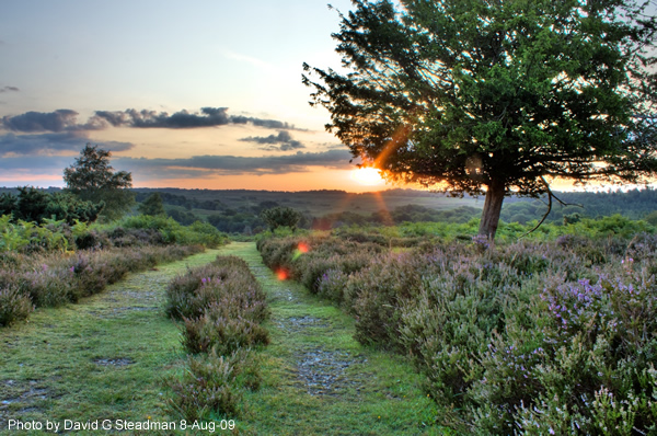 Sunrise in the New Forest